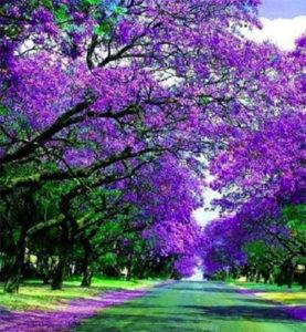 strada-con-fiori